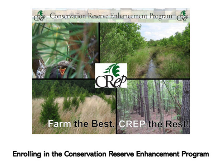 CREP Program Information - Contact Lindsay Martinez in Johnston County 919-300-4836 for more information